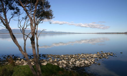 Te Reo Māori in Action – Waitangi Day – Hīkoi ki Paetūmōkai
