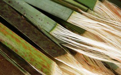 Toi Whatu (Pahiatua), starts 27th July