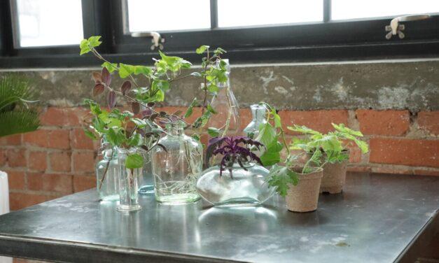 How to Propagate House Plants – A one Hour Workshop
